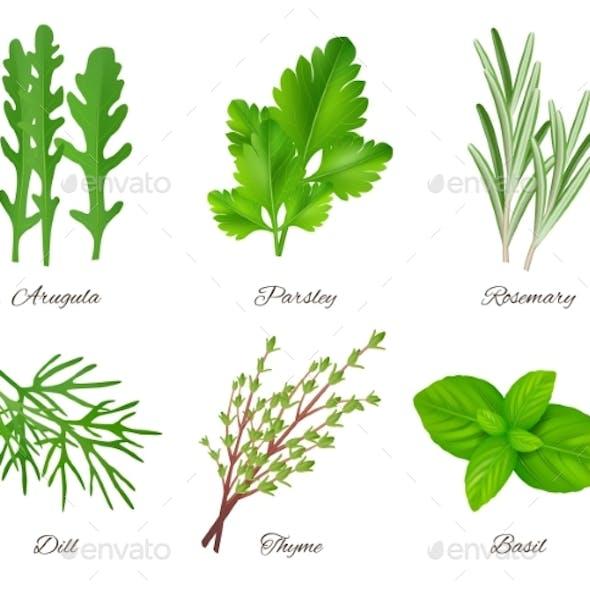 Herbs Realistic