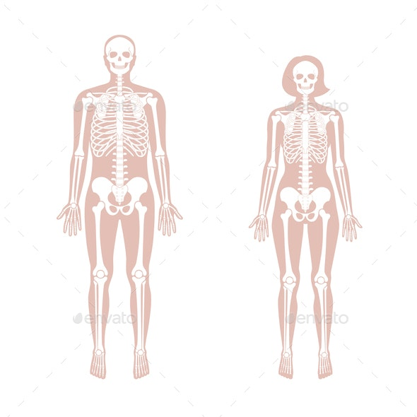 diagram of male skeleton woman and man skeleton anatomy by pikovit graphicriver  woman and man skeleton anatomy by