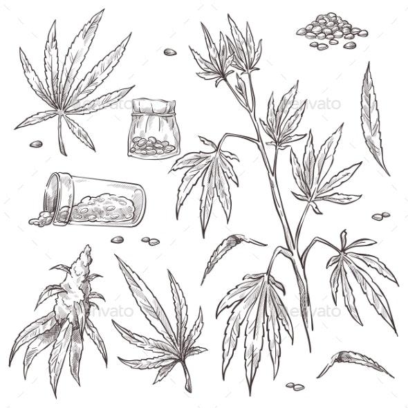 Alternative Medicine Cannabis Plant and Marijuana - Flowers & Plants Nature