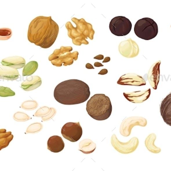 Cartoon Nuts