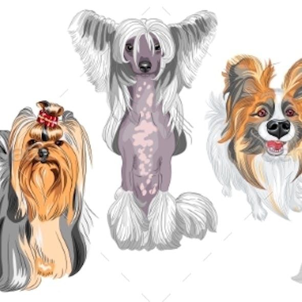 Fluffy Dogs Different Breeds