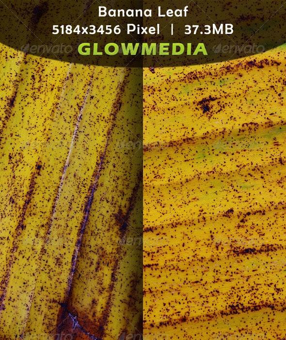Banana Leaf - Nature Textures