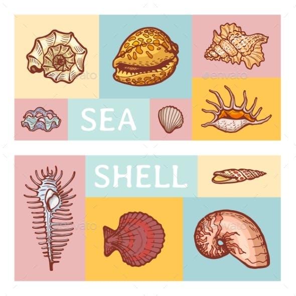 Sea Shell Cartoon Vector Illustration Icon