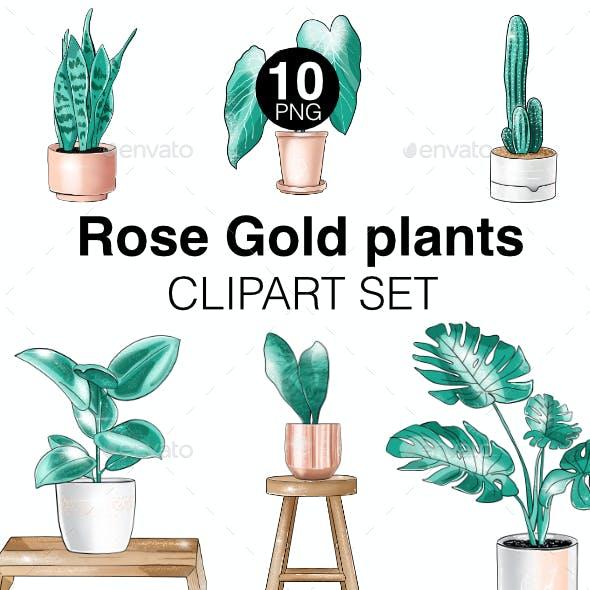 House Plants Clipart Set