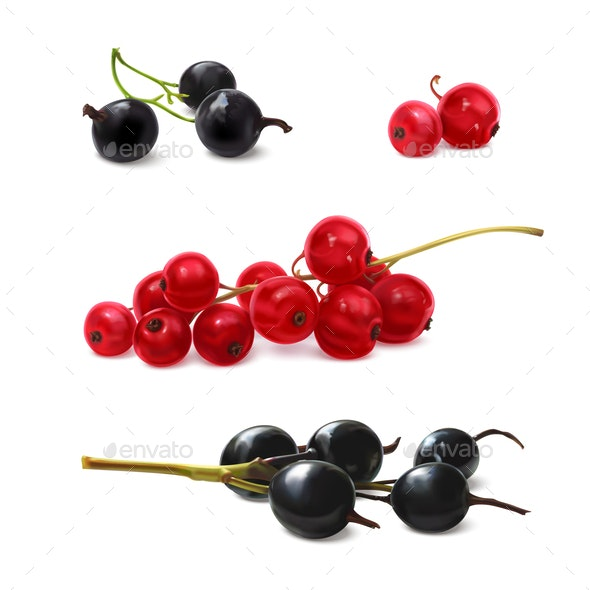 Black and Red Currant - Food Objects