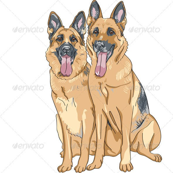 Two Dog German Shepherd Breed