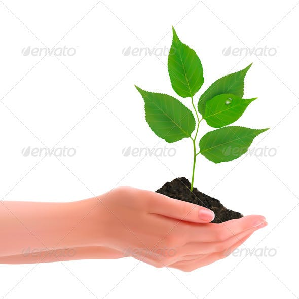 Hands holding young plant. Vector