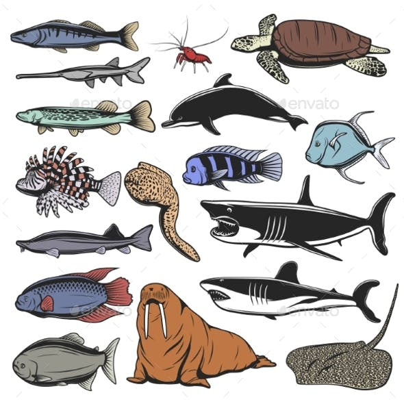 Sea Animals, Isolated Fish and Turtle