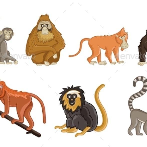 Cartoon Monkeys Wildlife and Zoo Animals