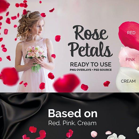 21+ Rose Petals Photo Overlays