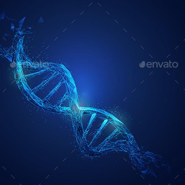 Polygon DNA