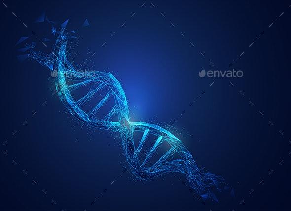 Polygon DNA - Miscellaneous Vectors