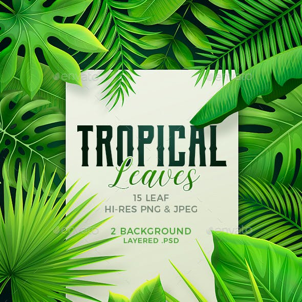 Tropical Leaves Collection of tropical leaves free vector. vevotpl com