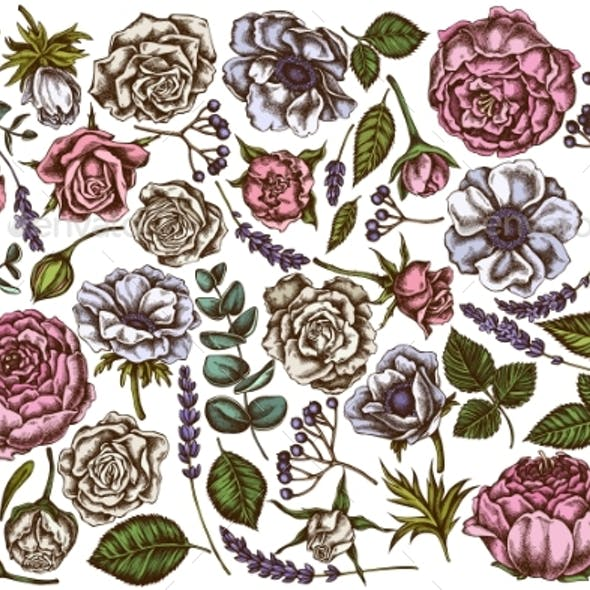 Vector Set of Hand Drawn Colored Roses, Anemone