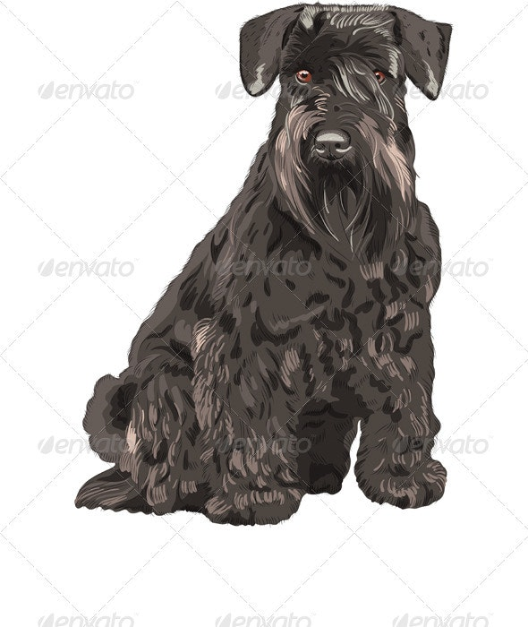 Vector Black Miniature Schnauzer Dog Sitting - Animals Characters