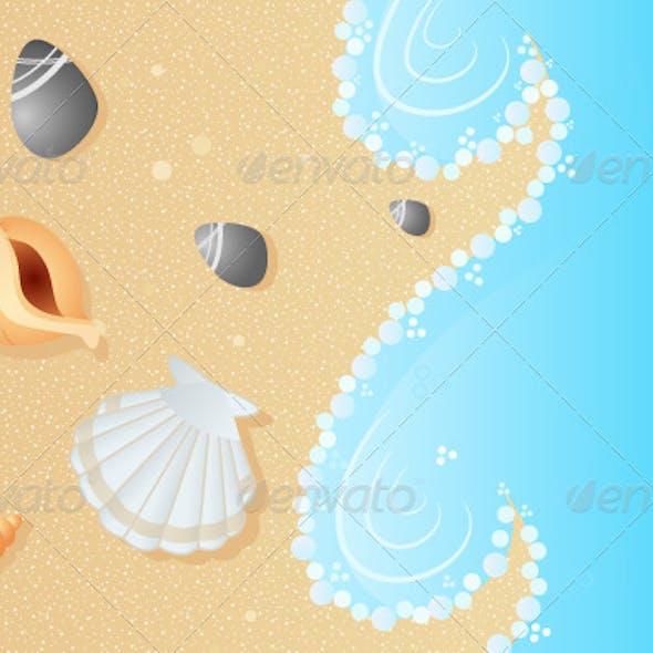 Seashells on a Beach