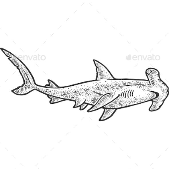 Hammerhead Shark Sketch Vector Illustration