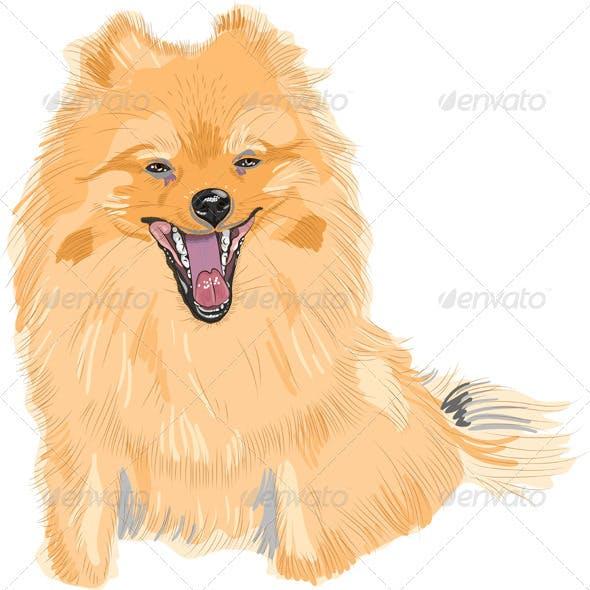Dog German Toy Pomeranian Breed Smiles