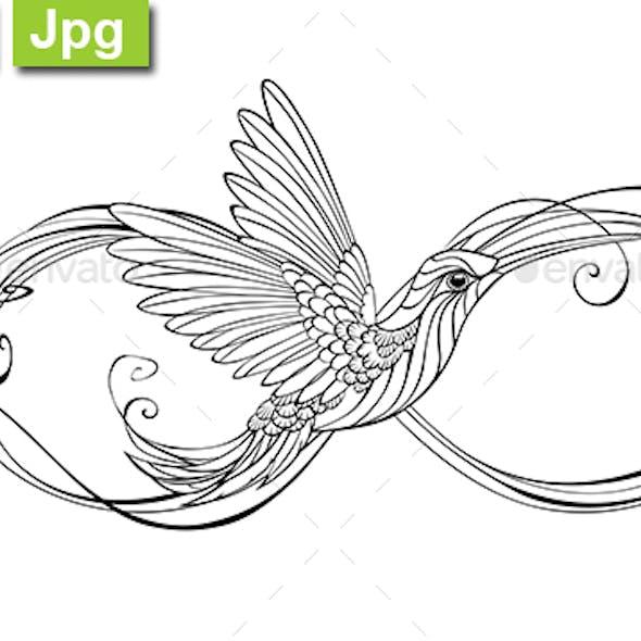 Contour Infinity with Hummingbird