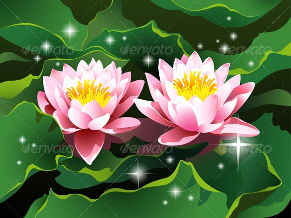 Lotus flowers in a pond - Flowers & Plants Nature