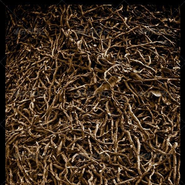 2 Roots Textures