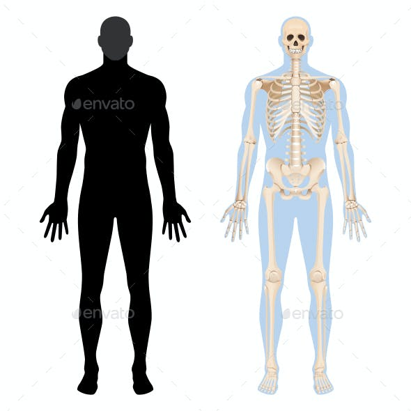 Human Internal Organs Icon Set