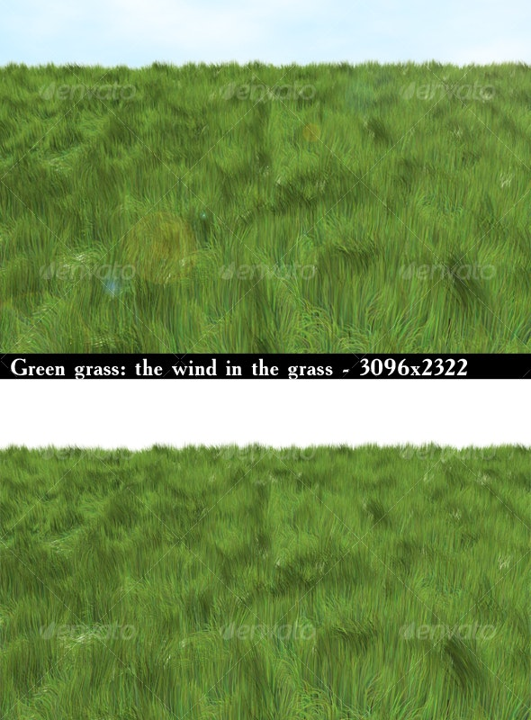 Green grass: the wind in the grass - Nature Textures