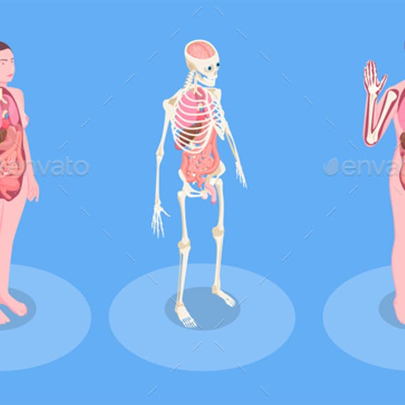 human body vector graphics designs templates human body vector graphics designs
