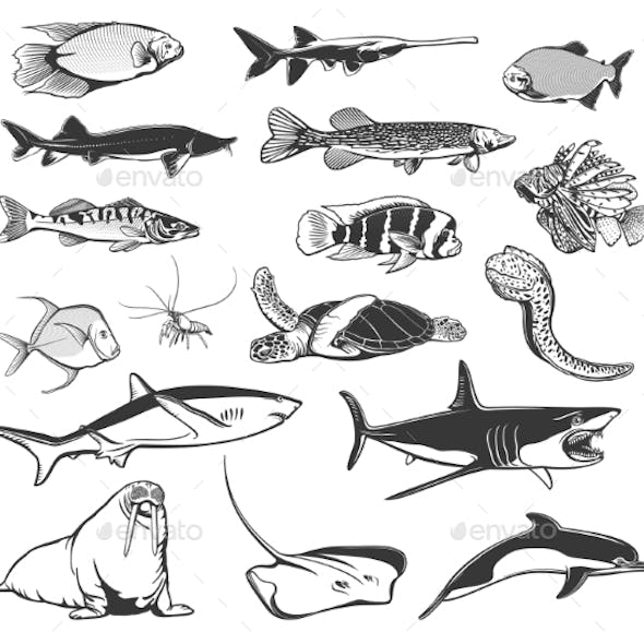 Sea Fish and Ocean Animal Isolated Icons