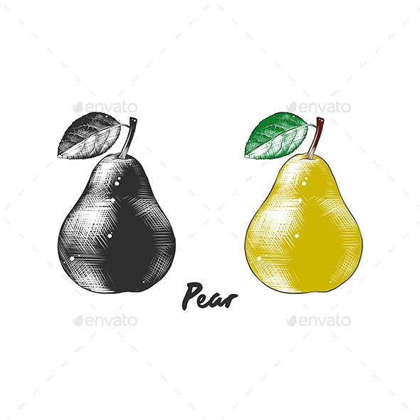 Hand Drawn Sketch Of Pear - Food Objects