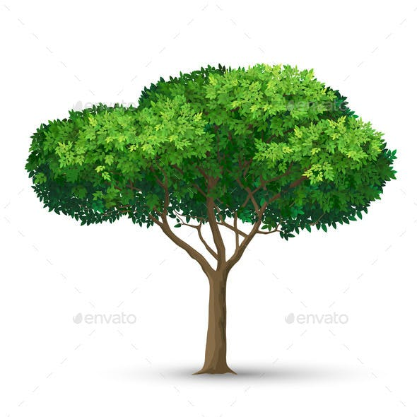 A Tree with a Dense Crown and Green Leaves