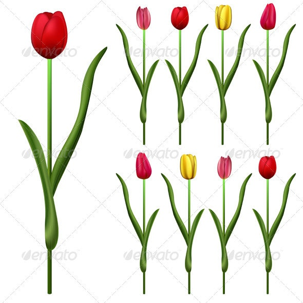 Tulips with different colors - Flowers & Plants Nature