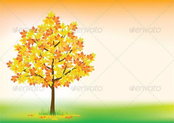 Autumn maple - Flowers & Plants Nature
