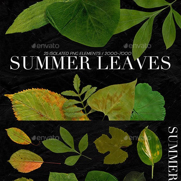 25 Isolated Summer Leaves