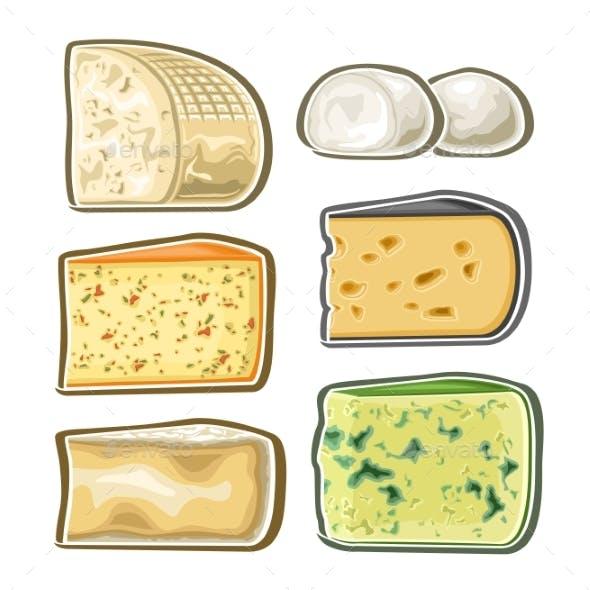 Vector Set of Fresh Cheese