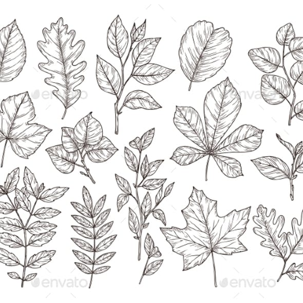 Hand Drawn Forest Leaves. Autumn Leaf Sketch