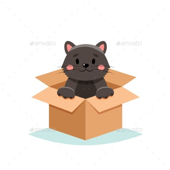 Adopt a Pet - Cat in a Box