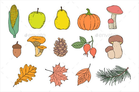 Set of Autumn Items - Flowers & Plants Nature