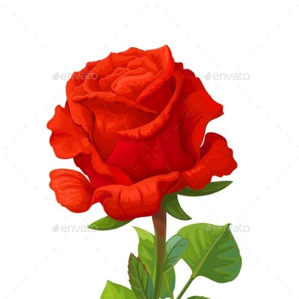 Vector Realistic Rose Flower Art
