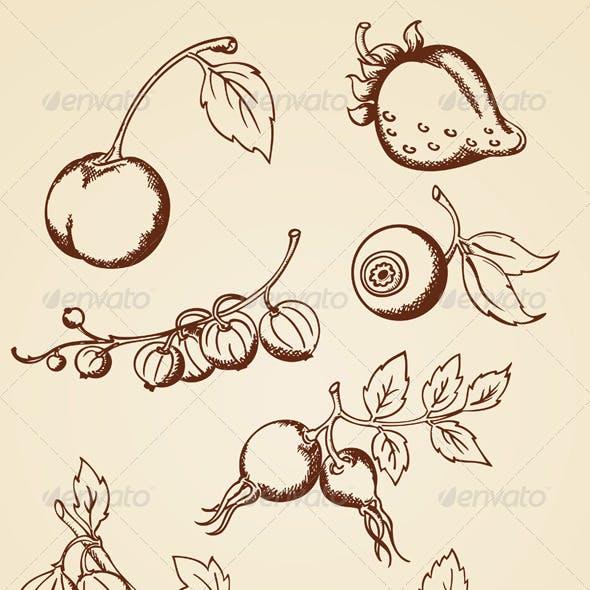 Hand Drawn Vintage Berries