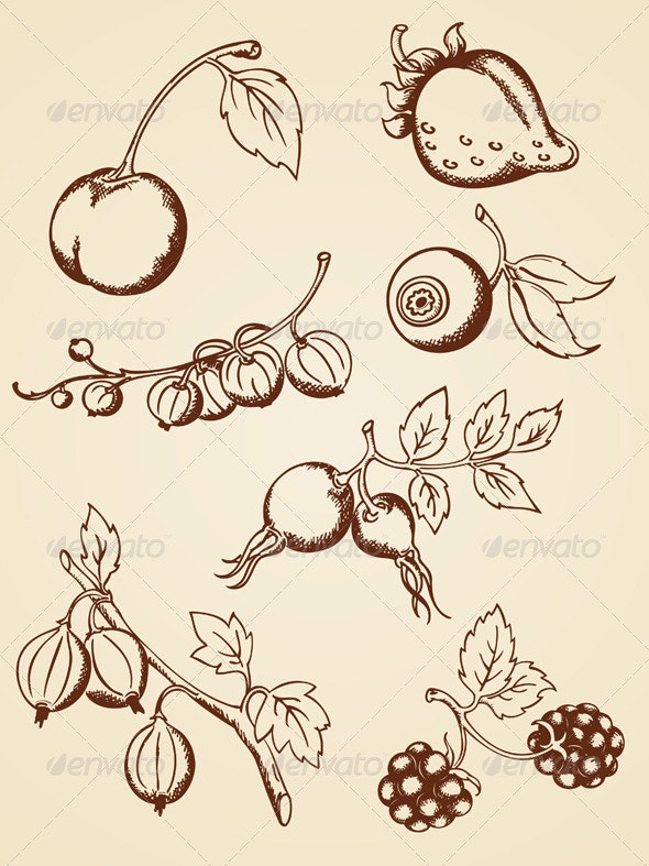 Hand Drawn Vintage Berries - Food Objects