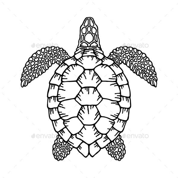 Decorative Graphic Vector Turtle for Coloring Book