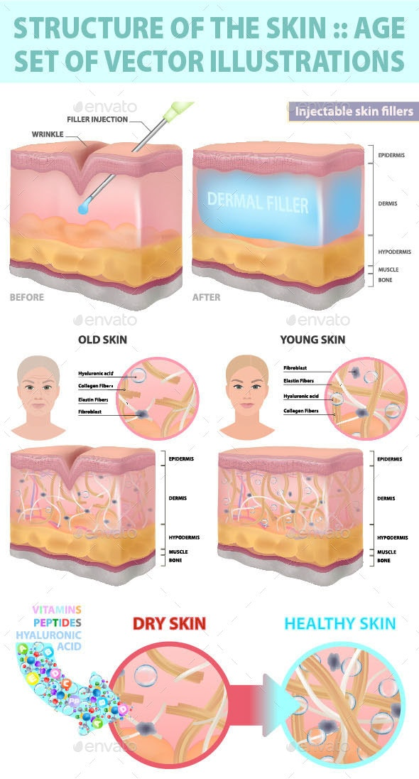 Structure of the Skin, Injection, Wrinkle, Rejuvenation - Vectors
