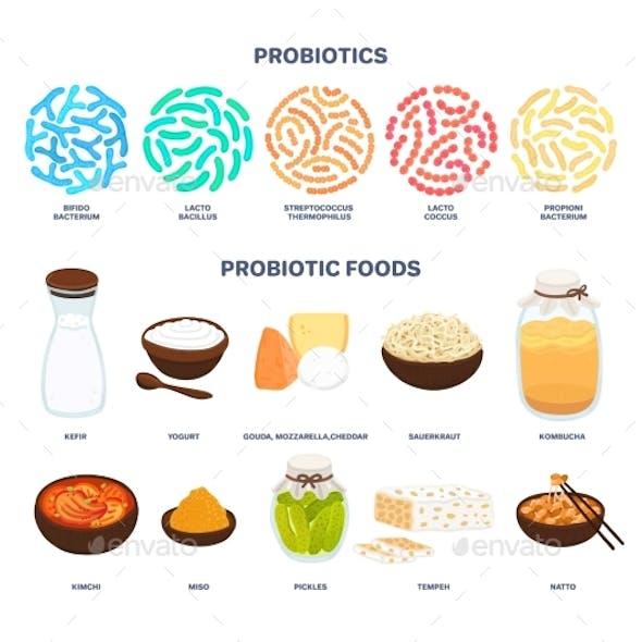 Vector Probiotic Foods Best Sources of Probiotics