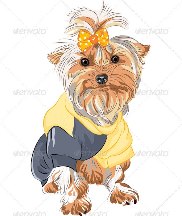 Vector Pedigreed Dog Yorkshire Terrier Sitting - Animals Characters