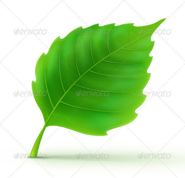 Green Detailed Leaf - Nature Conceptual