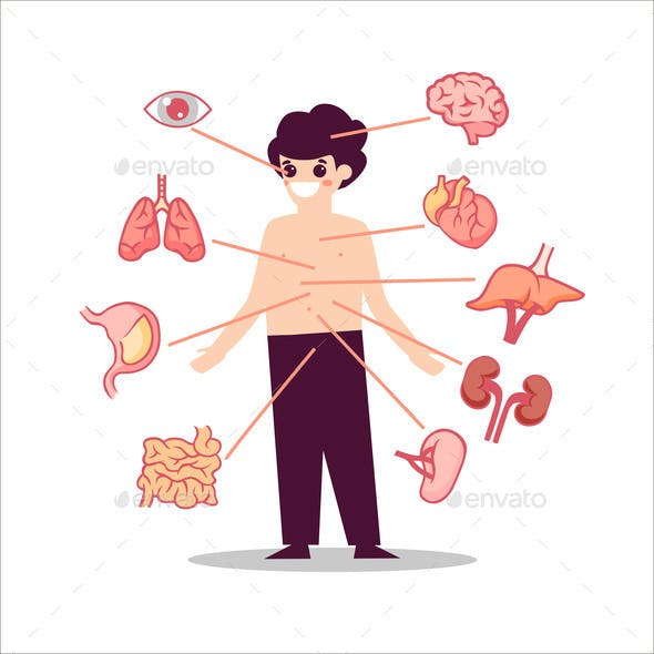 Human Anatomy Organs Illustration Semicircular