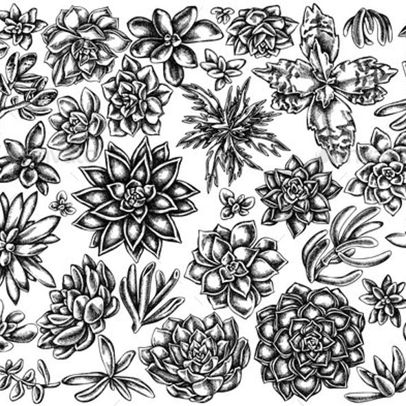 Vector Set of Hand Drawn Black and White Succulent