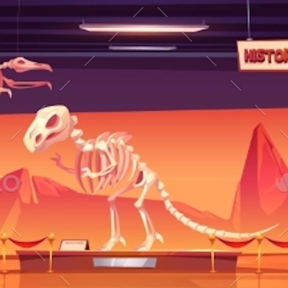 Dinosaur Skeleton in Museum of History Exhibition