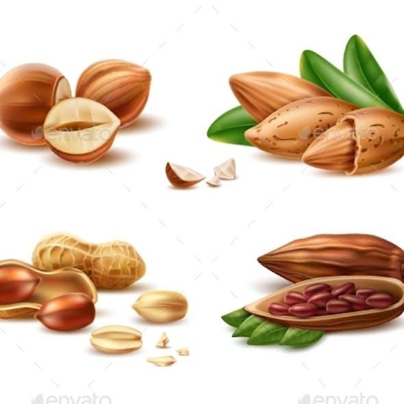 Vector Realistic Hazelnut Peanut Almond Cocoa Bean